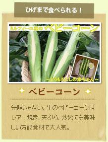 ベビーコーン:缶詰じゃない、生のベビーコーンはレア!焼き、天ぷら、炒めても美味しい万能食材で大人気。