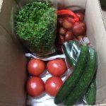 9月度、野菜図鑑ランキング入賞者の方からコメントいただきました!!!