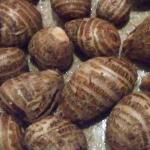 11月ランキングプレゼント「大野芋」の感想